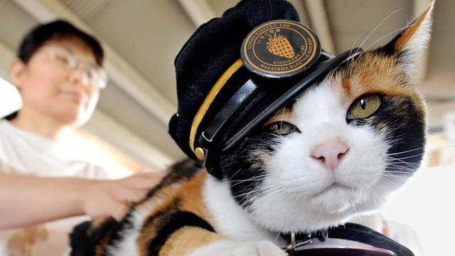 """Tama: Từ con mèo hoang đến """"trưởng ga tàu"""" nổi tiếng nhất cả nước, biểu tượng văn hóa đáng tự hào của Nhật Bản - Ảnh 1."""