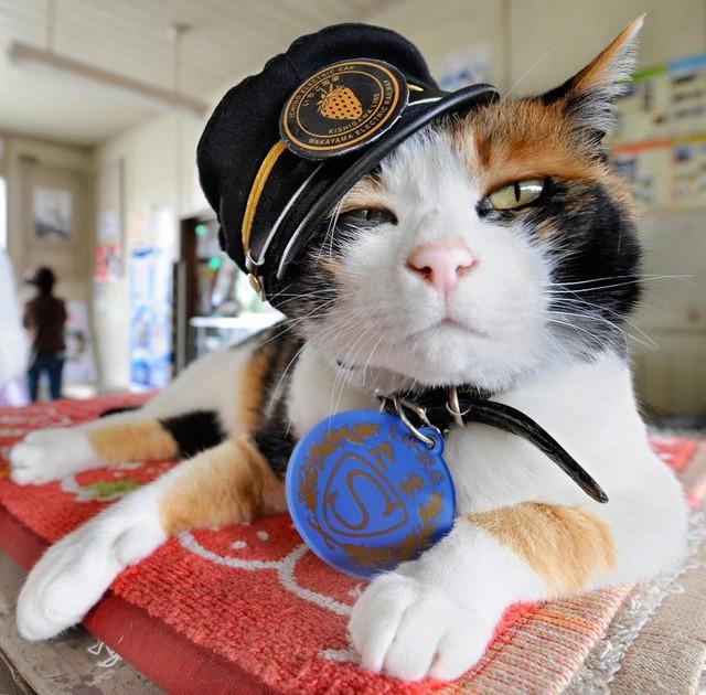 """Tama: Từ con mèo hoang đến """"trưởng ga tàu"""" nổi tiếng nhất cả nước, biểu tượng văn hóa đáng tự hào của Nhật Bản - Ảnh 2."""
