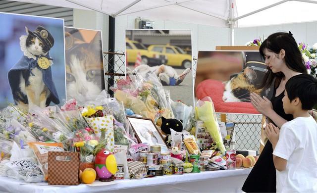 """Tama: Từ con mèo hoang đến """"trưởng ga tàu"""" nổi tiếng nhất cả nước, biểu tượng văn hóa đáng tự hào của Nhật Bản - Ảnh 8."""