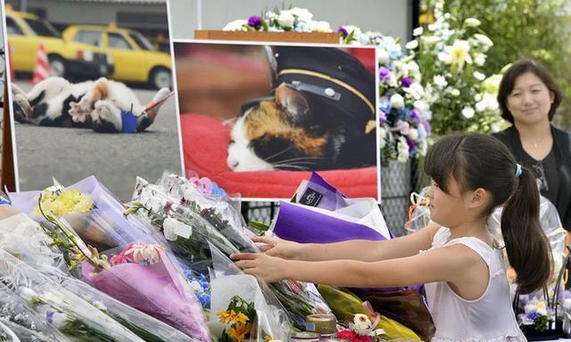 """Tama: Từ con mèo hoang đến """"trưởng ga tàu"""" nổi tiếng nhất cả nước, biểu tượng văn hóa đáng tự hào của Nhật Bản - Ảnh 9."""