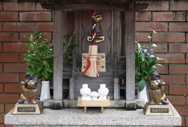 """Tama: Từ con mèo hoang đến """"trưởng ga tàu"""" nổi tiếng nhất cả nước, biểu tượng văn hóa đáng tự hào của Nhật Bản - Ảnh 10."""