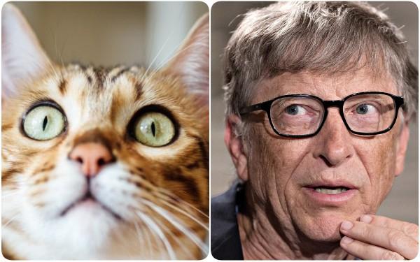 Mèo và các doanh nhân thành đạt: có mối liên hệ rất quái đản mà bạn sẽ không bao giờ nghĩ đến - Ảnh 3.