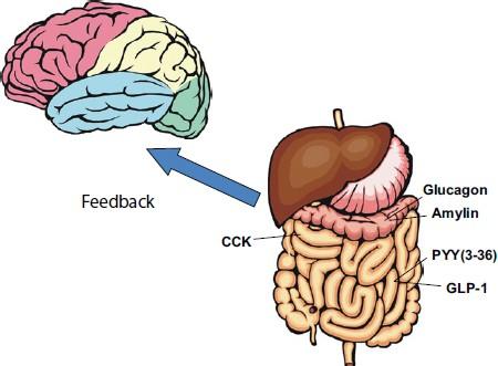 Trí nhớ của hệ thống tiêu hóa giúp chúng ta nhớ rõ nơi mình từng được ăn ngon - Ảnh 2.