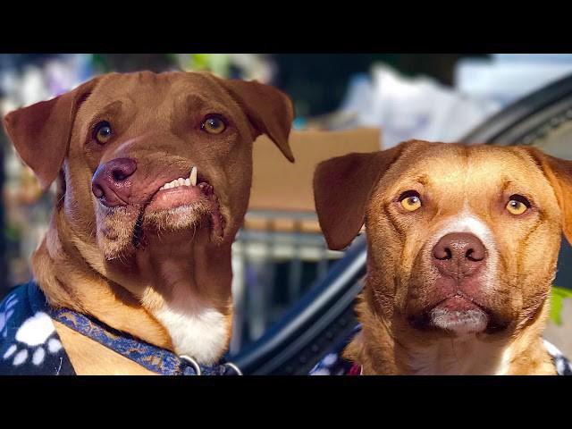 Chú chó xấu xí với khuôn mặt biến dạng trở thành nguồn cảm hứng sống của nhiều người nhờ điều đặc biệt này - Ảnh 3.