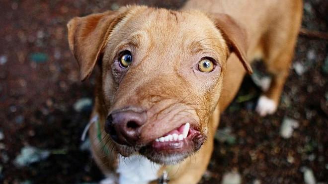 Chú chó xấu xí với khuôn mặt biến dạng trở thành nguồn cảm hứng sống của nhiều người nhờ điều đặc biệt này - Ảnh 5.