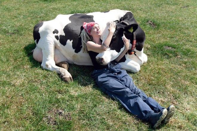 Ôm ấp các chú bò đã trở thành trào lưu và bạn sẽ tốn khoảng 2 triệu đồng cho 1 giờ ôm - Ảnh 3.