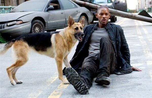 Abbey, cô chó thông minh trong I Am Legend của Will Smith giờ đã 13 tuổi, không nghe thấy gì nhưng vẫn hiếu động - Ảnh 2.