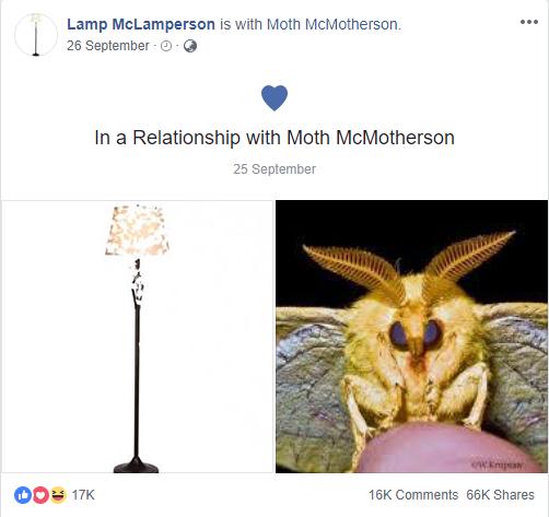 Nguồn gốc của loạt meme bướm đêm và chiếc đèn đang khuynh đảo Internet - Ảnh 1.