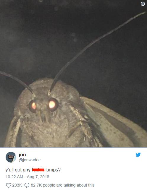 Nguồn gốc của loạt meme bướm đêm và chiếc đèn đang khuynh đảo Internet - Ảnh 4.