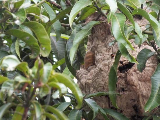 Trung Quốc: 1 người tử vong, 1 người nguy kịch vì bị 50 con ong vò vẽ đốt khi đi săn ấu trùng - Ảnh 1.