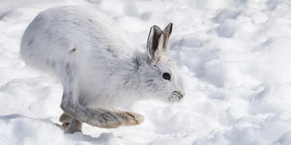 Video ghi lại cảnh thỏ ăn thịt đồng loại làm bất ngờ giới khoa học - Ảnh 3.