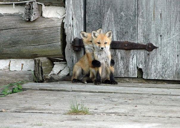 Chiêm ngưỡng bộ ảnh tạo dáng siêu đáng yêu của động vật trước ống kính máy ảnh - Ảnh 3.
