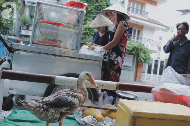Câu chuyện kỳ lạ về tình mẫu tử của người phụ nữ bán trái cây và chú vịt biết làm nũng ở Sài Gòn - Ảnh 2.