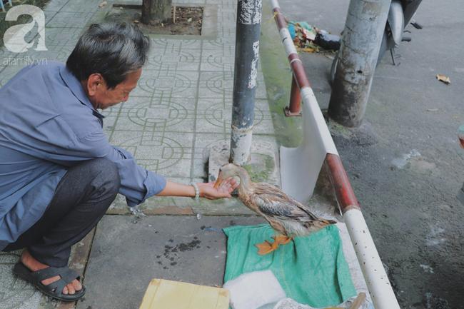 Câu chuyện kỳ lạ về tình mẫu tử của người phụ nữ bán trái cây và chú vịt biết làm nũng ở Sài Gòn - Ảnh 13.