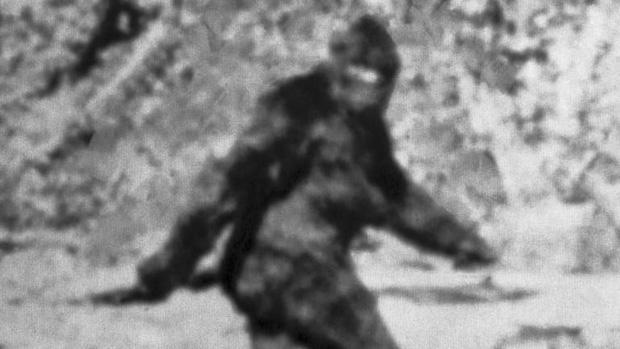Xuất hiện video ghi lại tiếng hú lạ kỳ của Bigfoot, chứng minh sinh vật huyền bí này thật sự tồn tại - Ảnh 1.