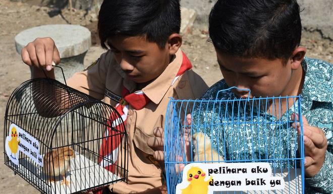 Học sinh Indonesia phải nuôi gà để… cai nghiện smartphone - Ảnh 1.