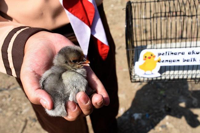 Học sinh Indonesia phải nuôi gà để… cai nghiện smartphone - Ảnh 2.