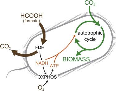 Các nhà khoa học tạo ra một chủng vi khuẩn E. coli có thể ăn khí CO2 để sống - Ảnh 3.