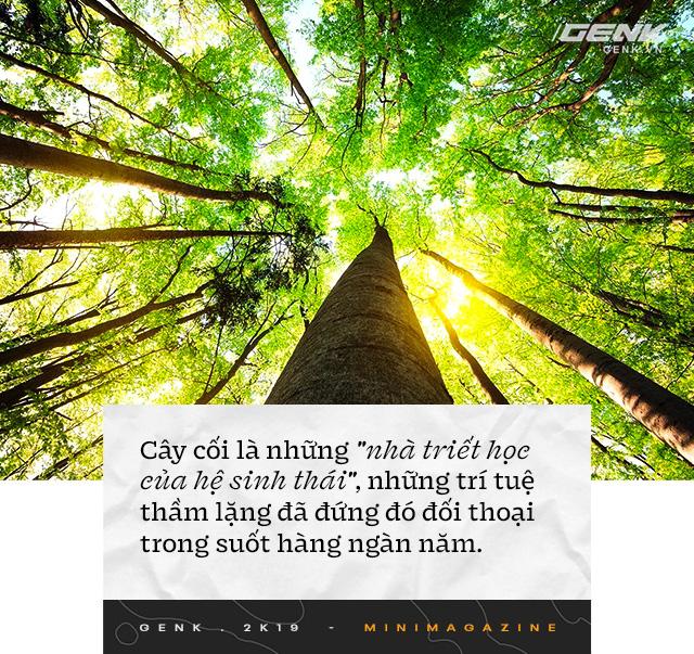 Nhà sinh vật học tin rằng cây cối biết nói chuyện, và chúng ta nên học ngôn ngữ của chúng - Ảnh 1.