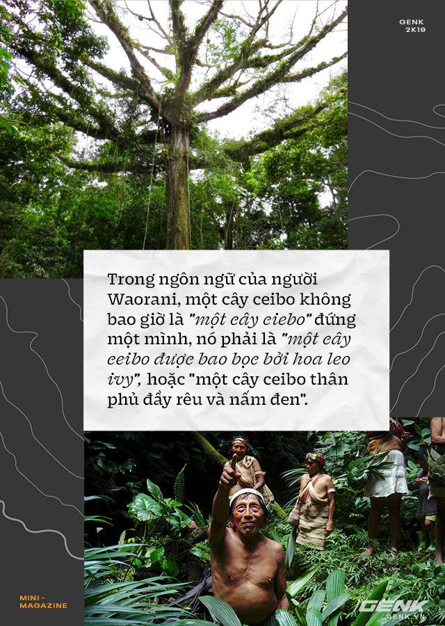 Nhà sinh vật học tin rằng cây cối biết nói chuyện, và chúng ta nên học ngôn ngữ của chúng - Ảnh 3.