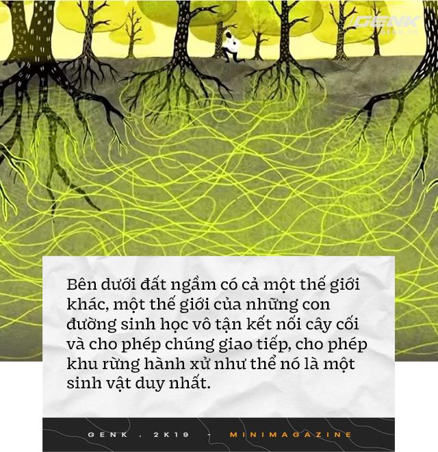 Nhà sinh vật học tin rằng cây cối biết nói chuyện, và chúng ta nên học ngôn ngữ của chúng - Ảnh 6.