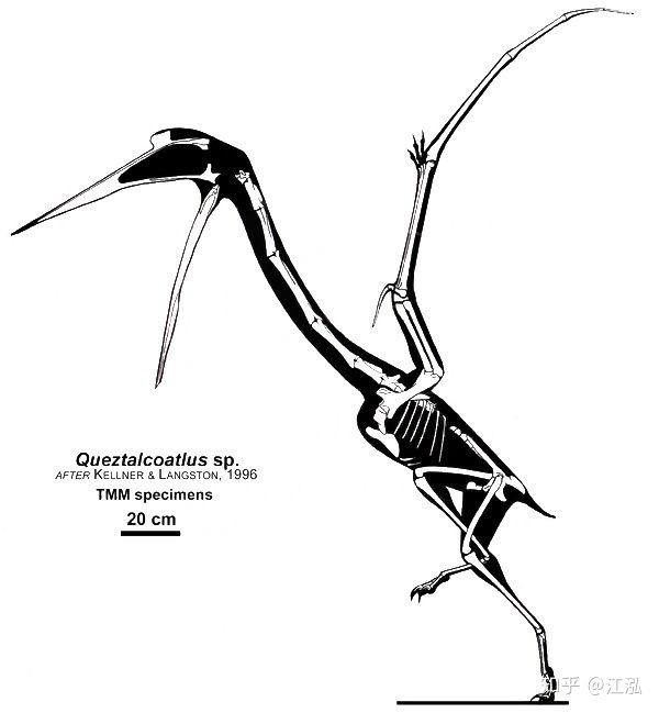 Nếu khủng long bay không bị tuyệt chủng, con người có thể thuần hóa chúng thành thú cưỡi không? - Ảnh 5.