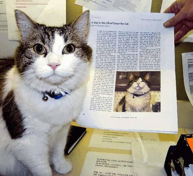 Oscar: Chú mèo báo tử dự đoán đúng hơn 100 cái chết, được cả tạp chí y khoa nổi tiếng ghi nhận khả năng đặc biệt - Ảnh 1.