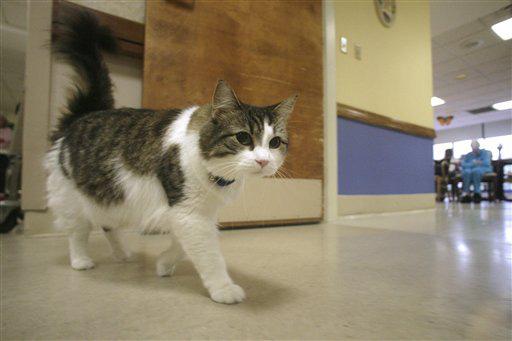 Oscar: Chú mèo báo tử dự đoán đúng hơn 100 cái chết, được cả tạp chí y khoa nổi tiếng ghi nhận khả năng đặc biệt - Ảnh 3.