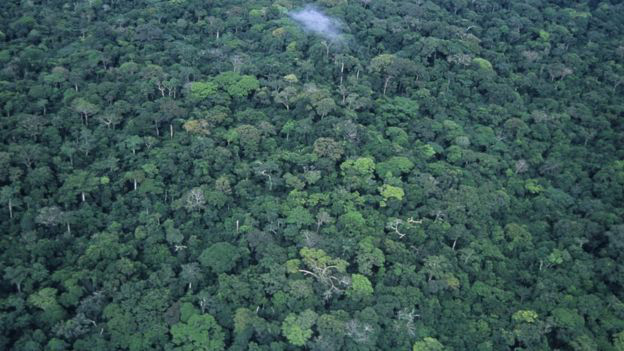 Trong biến đổi khí hậu, cả Châu Phi đang như người mộng du đi thẳng tới bờ vực - Ảnh 6.