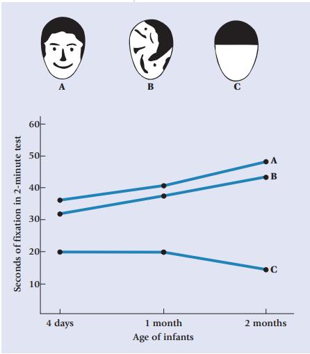 Những thí nghiệm thú vị trong lịch sử tiết lộ 5 sự thật ít biết về thị giác trẻ sơ sinh - Ảnh 3.