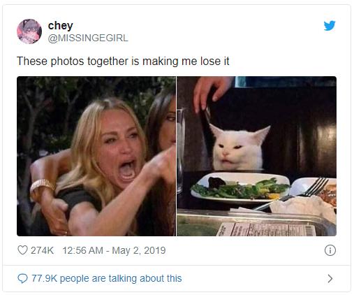 Chú mèo trắng Smudge đã sản sinh ra chiếc meme đình đám cô gái la con mèo như thế nào - Ảnh 3.