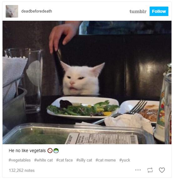 Chú mèo trắng Smudge đã sản sinh ra chiếc meme đình đám cô gái la con mèo như thế nào - Ảnh 6.