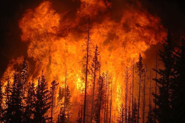 Thế giới sẽ đối mặt với hàng loạt thảm họa nếu rừng Amazon cháy rụi: 90% bệnh tật không có thuốc chữa, 50% loài sinh vật bị tiêu diệt - Ảnh 5.