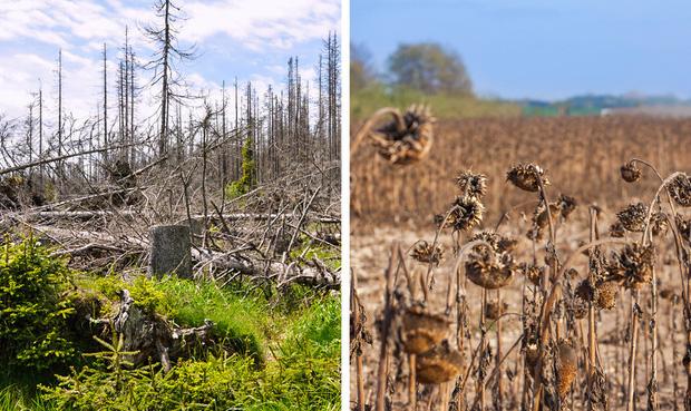 Thế giới sẽ đối mặt với hàng loạt thảm họa nếu rừng Amazon cháy rụi: 90% bệnh tật không có thuốc chữa, 50% loài sinh vật bị tiêu diệt - Ảnh 7.