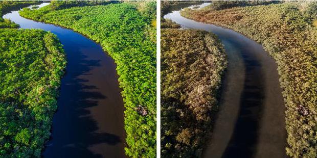 Thế giới sẽ đối mặt với hàng loạt thảm họa nếu rừng Amazon cháy rụi: 90% bệnh tật không có thuốc chữa, 50% loài sinh vật bị tiêu diệt - Ảnh 10.