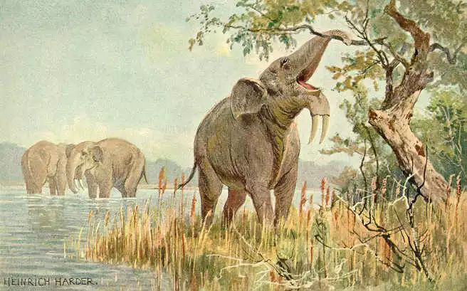 Vì sao mũi của loài voi lại tiến hóa để dài như vậy? - Ảnh 7.