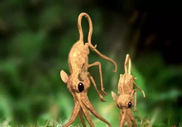 Nosewalkers - loài động vật kì lạ nhất Trái Đất, dù có chân nhưng lại dùng mũi để di chuyển - Ảnh 4.
