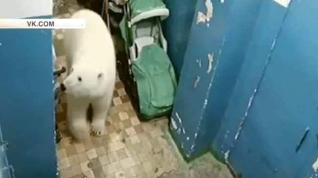 Bị xâm lăng bởi binh đoàn 52 con gấu trắng, quần đảo Nga phải ban bố tình trạng khẩn cấp - Ảnh 3.