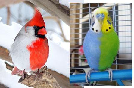 Động vật lưỡng tính kỳ lạ của tự nhiên: một cơ thể sở hữu cả hai cơ quan sinh dục đực và cái - Ảnh 2.