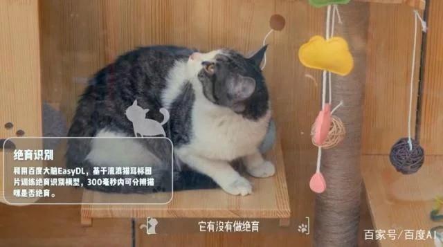 Baidu công bố dự án nơi trú ẩn cho những con mèo đi lạc với công nghệ AI và hỗ trợ nhận dạng mèo - Ảnh 1.