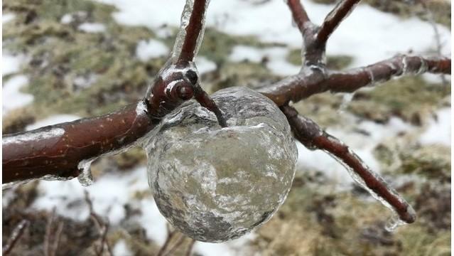 Tình trạng lạnh giá tại Mỹ tạo ra những quả táo ma bằng đá vô cùng độc đáo - Ảnh 3.