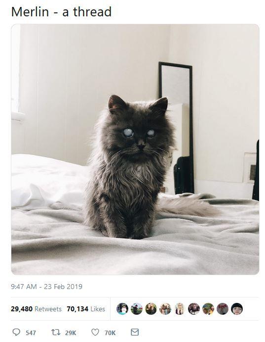 Chú mèo với đôi mắt trắng bệch như phủ thủy làm phép khiến internet náo loạn - Ảnh 4.