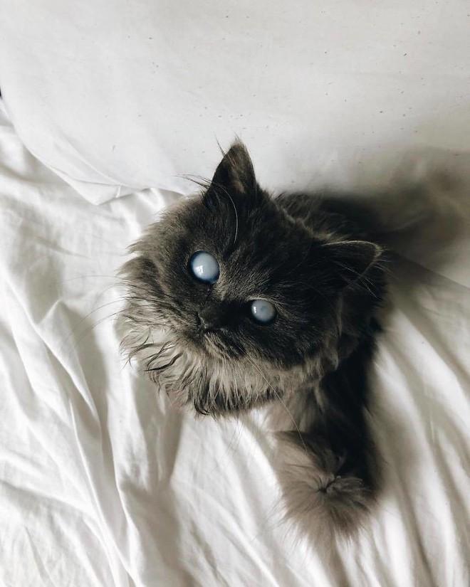 Chú mèo với đôi mắt trắng bệch như phủ thủy làm phép khiến internet náo loạn - Ảnh 12.