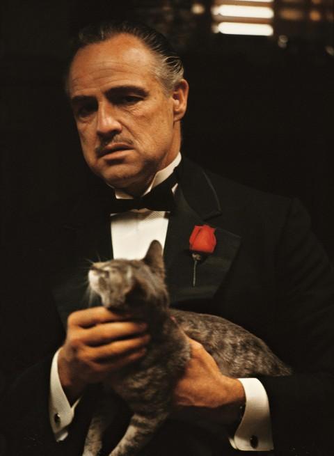 Ngoài Goose trong Captain Marvel, đây là 7 boss mèo khác cũng ngầu không kém của thế giới phim ảnh - Ảnh 6.