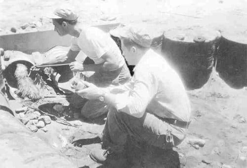 Những người lính bốn chân: Smoky, bác sĩ trị liệu tâm lý của Thế Chiến thứ Hai - Ảnh 1.