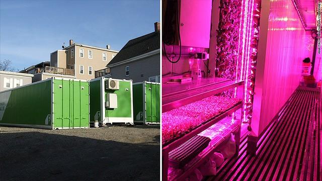 Freight Farms và công nghệ trồng rau tương lai: Không đất, không hóa chất, bất chấp thời tiết, hiệu quả gấp 80 lần và thu về 39.000 USD mỗi container - Ảnh 2.