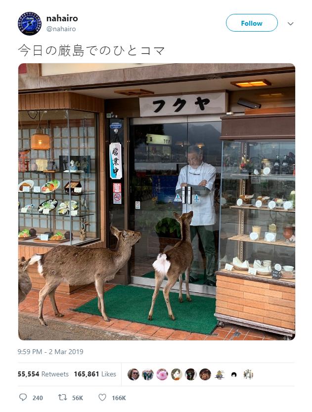 Hiện tượng hươu xin đểu tràn lan tại Nhật Bản vô tình giúp quảng bá du lịch nước này - Ảnh 1.
