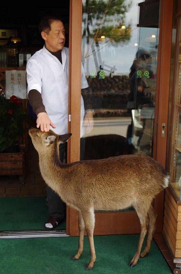 Hiện tượng hươu xin đểu tràn lan tại Nhật Bản vô tình giúp quảng bá du lịch nước này - Ảnh 5.
