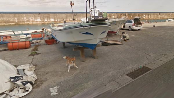 Chú chó Nhật hủy hoại mọi khung hình của Google Street View vì đuổi theo camera - Ảnh 2.