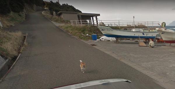 Chú chó Nhật hủy hoại mọi khung hình của Google Street View vì đuổi theo camera - Ảnh 5.